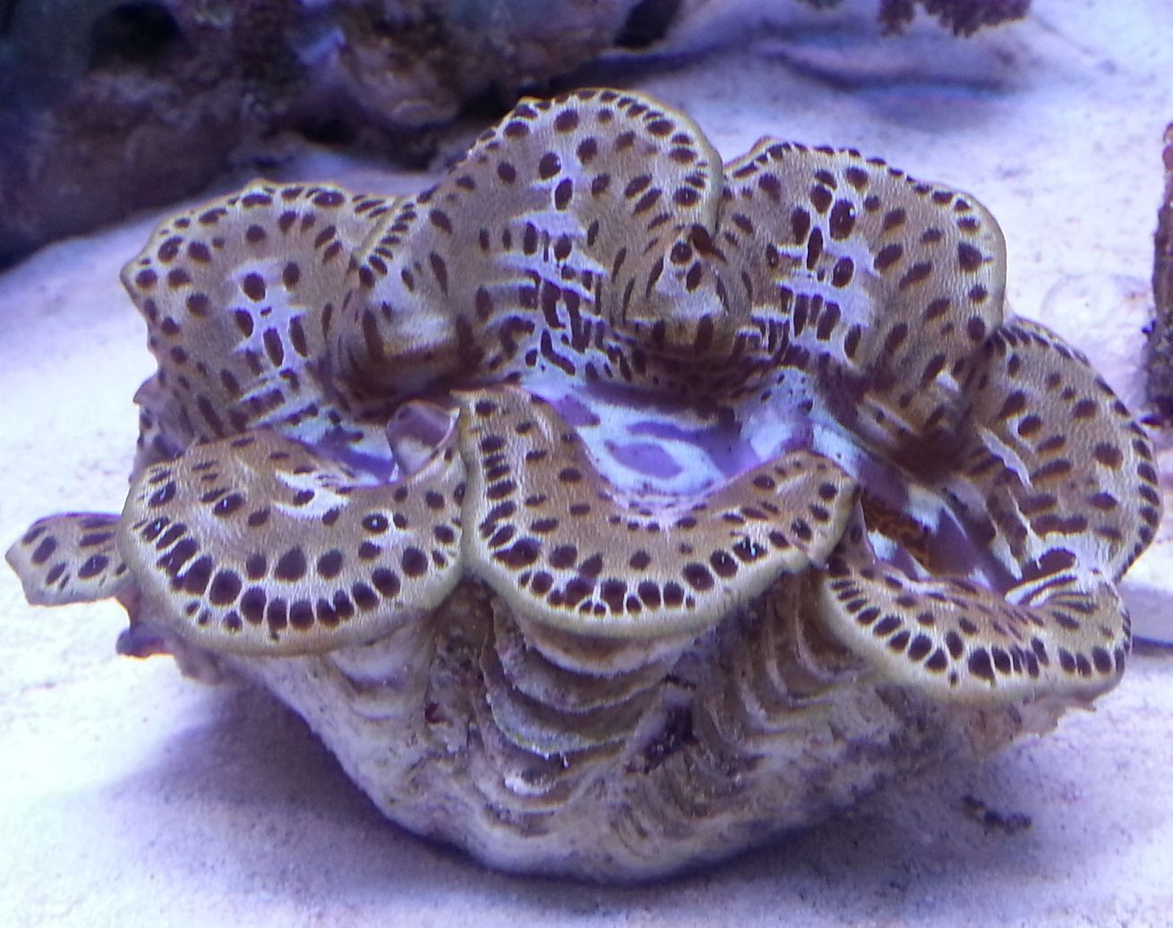 Giant Clams Page 2